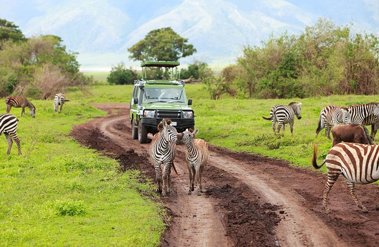 On Safari: The Best National Parks in Tanzania