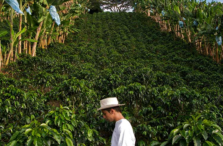 Zona Cafetera: Visit Colombia's Coffee Zone for a Cuppa