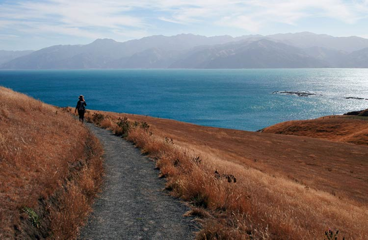 Why Kaikoura Should Be on Your South Island Itinerary