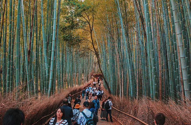 Bamboo Forest of Arashiyama
