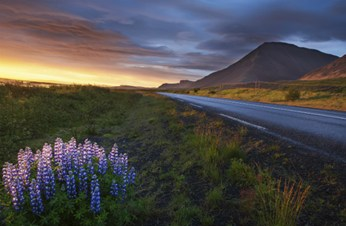 Safety Tips for Driving in Iceland: Are the Roads Safe?