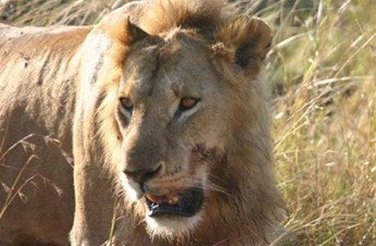 Kenya safari guide - Lions, tigers and bears oh my!