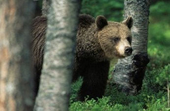 Finland: Bears, bugs & killer moose → How to stay safe