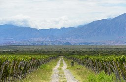 Argentina Discoveries: Argentina's Love for Wine & Beer