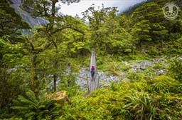 NZ's Milford Track: How Heavy Are Your Cameras?
