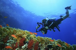Scuba Diving & Snorkelling in Egypt Safely