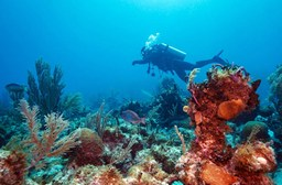 Safety Tips for Travelers Scuba Diving in Cuba