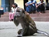 Monkey madness in Malaysia. Tips to keep you safe!