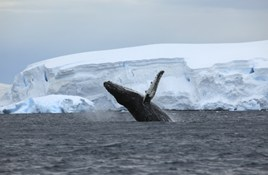 Staying safe while travelling in Antarctica