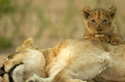 South African wildlife & weather - What you should know