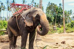 Why Elephant Riding Should Be Removed from Your List