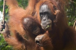 Indonesia Discoveries: Ecotourism in Northern Sumatra