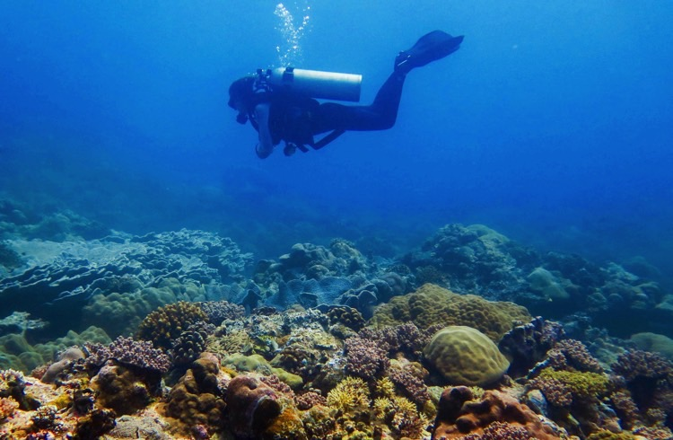 Redefine the Dive: 10 Tips to Dive Sustainably