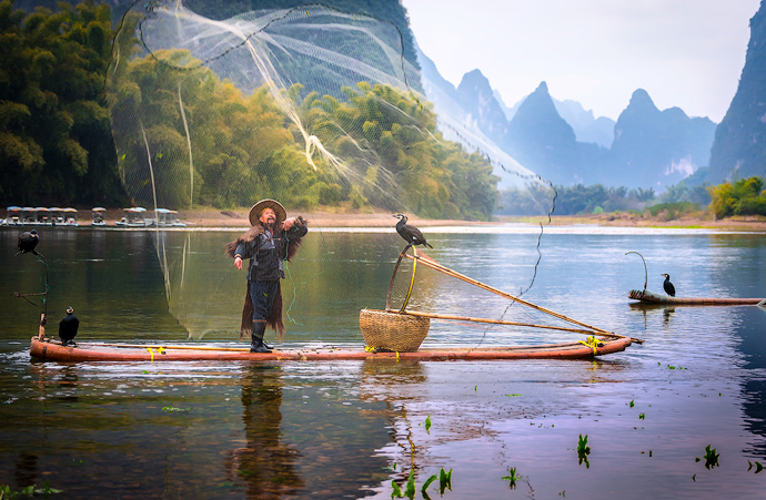 The cormorant is trained to return to the boat and spit the larger fish out for the fisherman. To keep the birds happy, the fisherman feed them the smaller fish that were caught.  Sadly, the 1000 year old tradition is fading due to overfishing and that stronger nets are proving more effective.